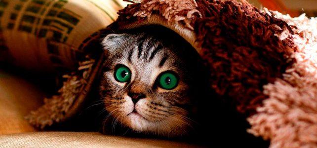 Et kai vain ole muuttumassa kissaksi? Huhtikuun sanataideillassa kohdattiin hulvattomia hybridilajeja
